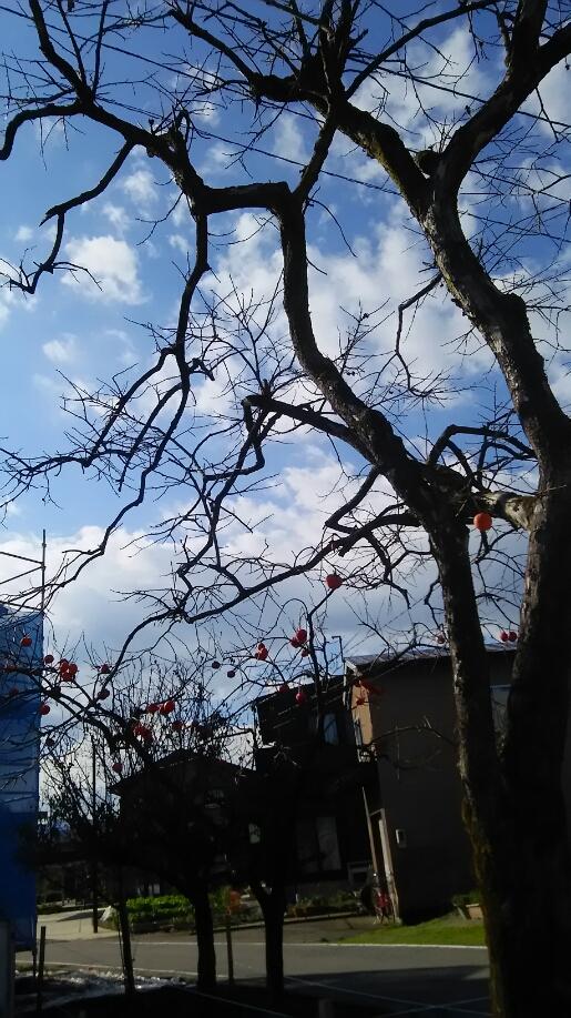 http://n-ko.jp/staffblog/DSC_0313.JPG